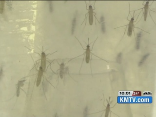 Zika virus in Nebraska: what you need to Know