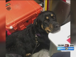 Paramedics go above and beyond to reunite dog...
