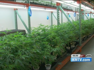 TONIGHT AT 10: Medical marijuana in Nebraska?