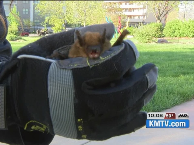 Hundreds of bats to be released, some concerned