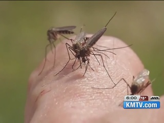 Local doctors talk about Zika virus