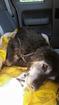 Volunteers rescue abandoned dog in Blair