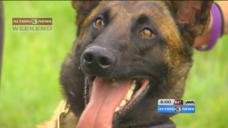 OPD K9 recovering after hit with metal pipe