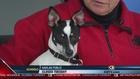 Nebraska Humane Society 1/17/17