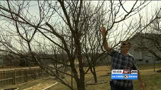 Up and down temperatures affecting fruit trees