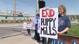 Puppy Mill Protests on Sunday