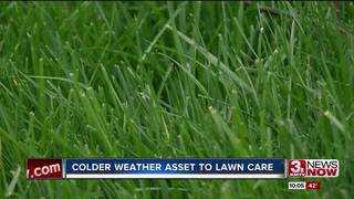 Colder WX an advantage for lawn care services