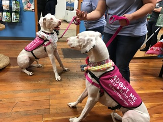 Two rescued blind and deaf dogs get adopted