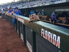 Florida hangs on to beat LSU in CWS Finals