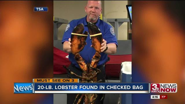 TSA pulls giant lobster from suitcase at Boston airport