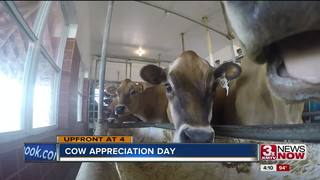 Saying thanks on Cow Appreciation Day