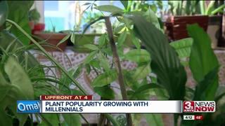 Houseplants a growing trendamong millennials