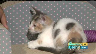Celebrate National Cat Day 10/18/17